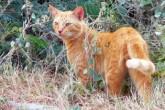 Australia matará a 2 millones de gatos, ¿por qué?