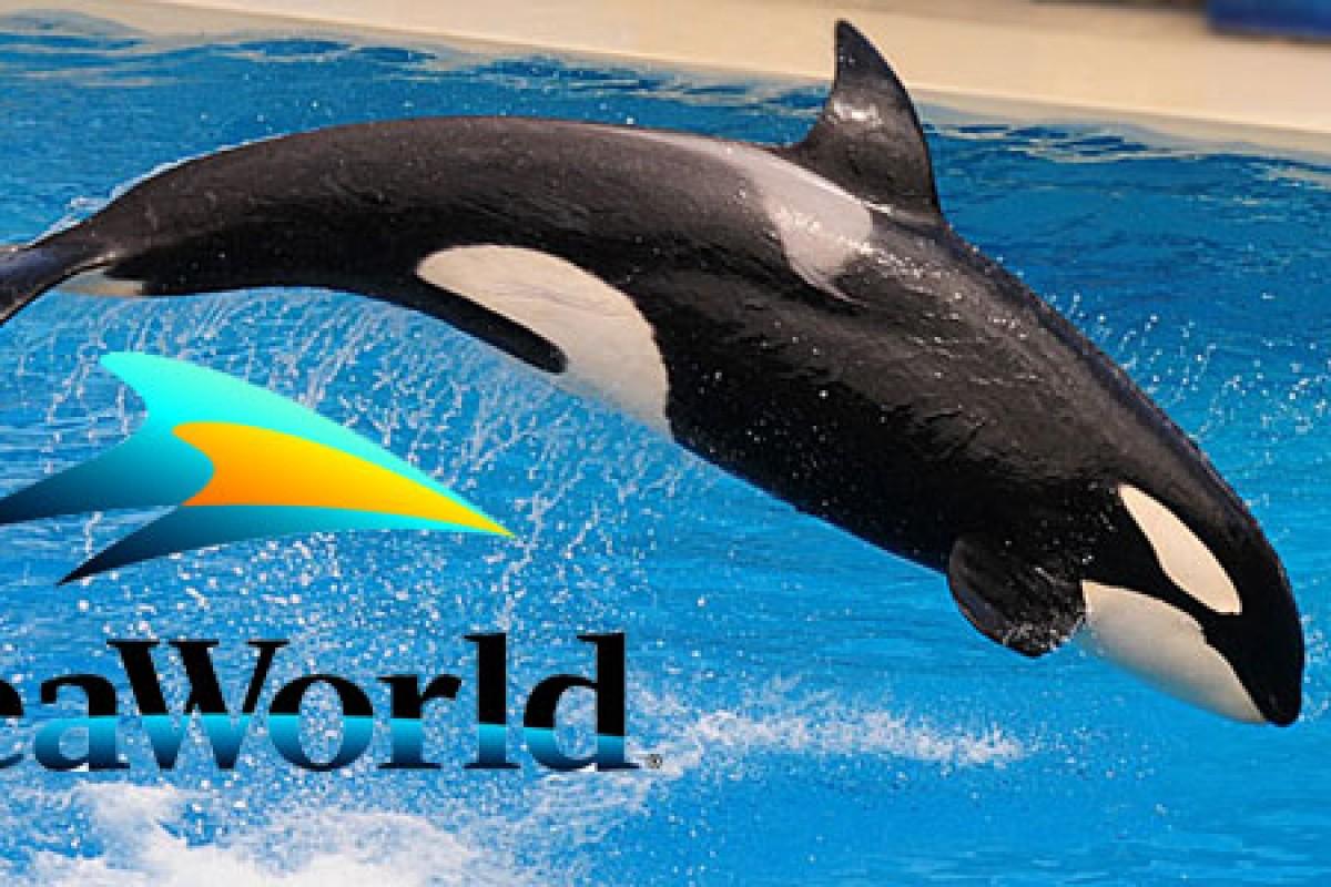 Otra orca muere en manos de SeaWorld