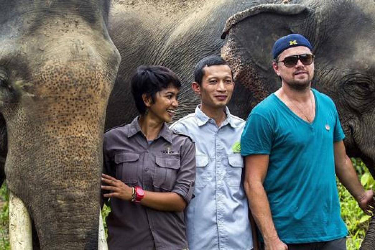 De los osos a los elefantes: Leo DiCaprio visita reserva en Indonesia