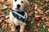 Mira a este adorable cachorro… ¡con frenillos!