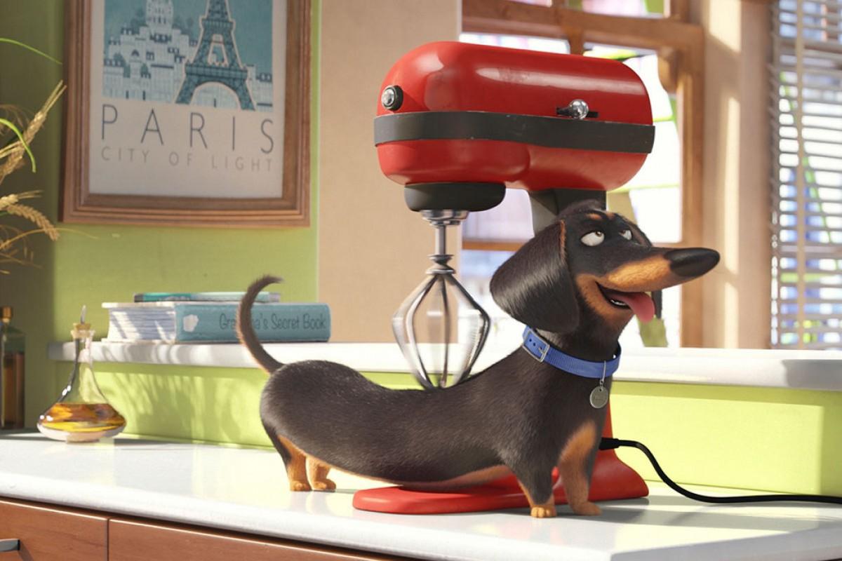 """""""La vida secreta de las mascotas"""" presentó nuevo trailer."""