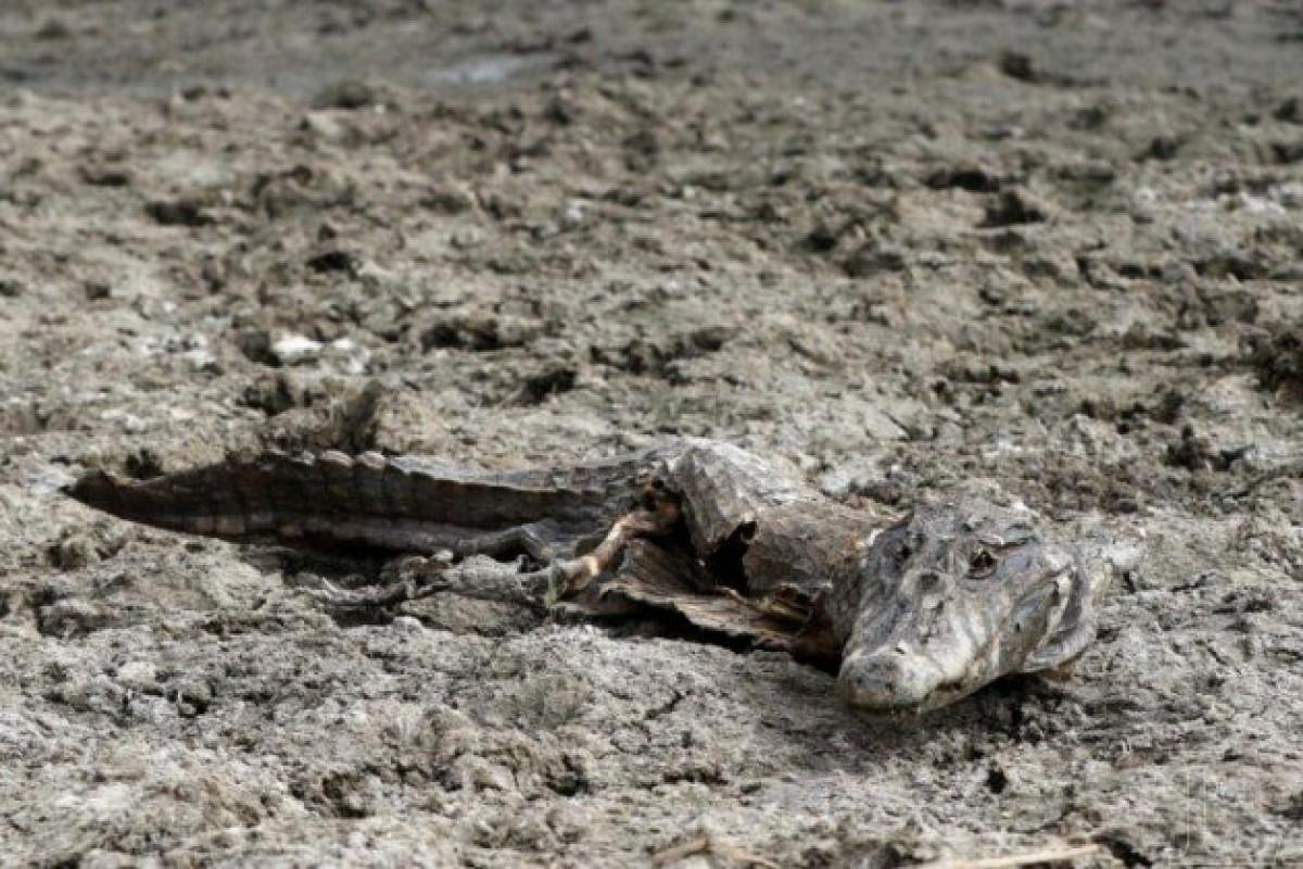 """Sequía del Pilcomayo: """"No se hallaron rastros de catástrofe ambiental"""", según la SEAM"""