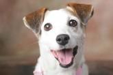 Holanda: El primer país sin perros abandonados en las calles