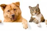 ¿Pulgas en tus mascotas? Así podes eliminarlas por completo