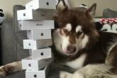 Le compró ocho iPhone 7 a su perro