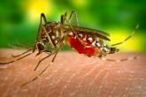 Virus del Zika: como identificarlo y combatirlo