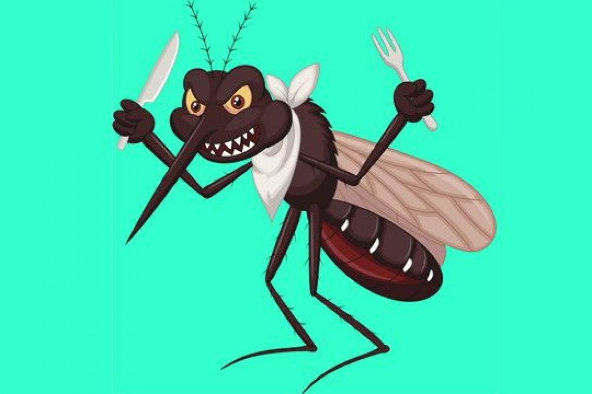 Mosquitos: Peligro constante para el ser humano