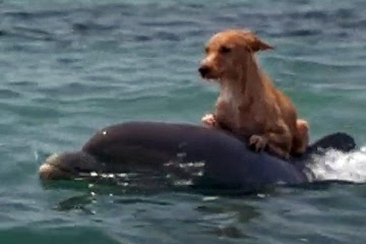 Un perro y un delfín nos dan una lección