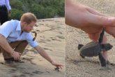 El príncipe Harry devolvió tortugas bebés a su hábitat natural