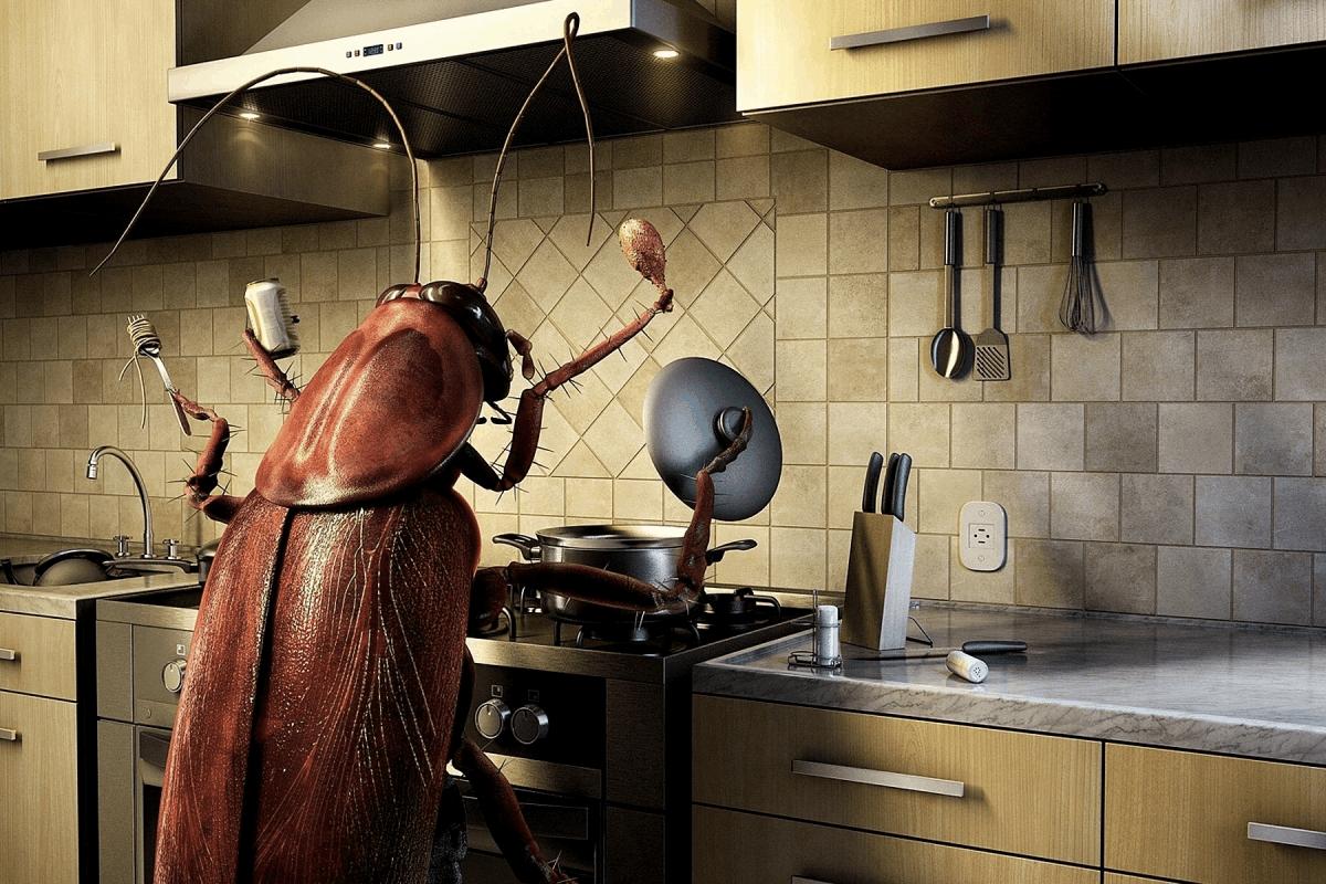 Métodos para eliminar cucarachas voladoras