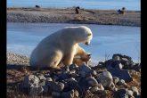 La historia tras la imagen del oso polar y el perro