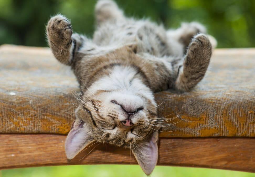 Descansar bien es la clave
