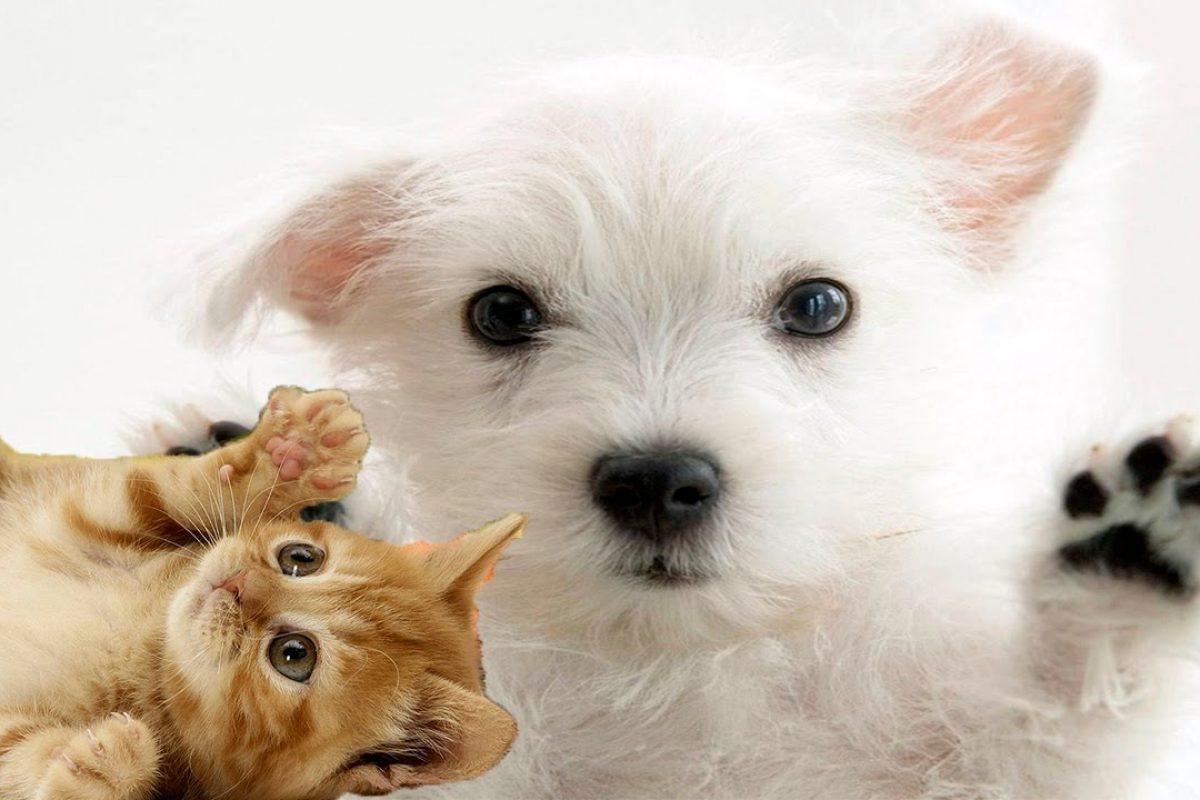 Que fumes también es malo para tu perro o gato