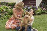 A dog's purpose: una película que te hará amar más a tu perro