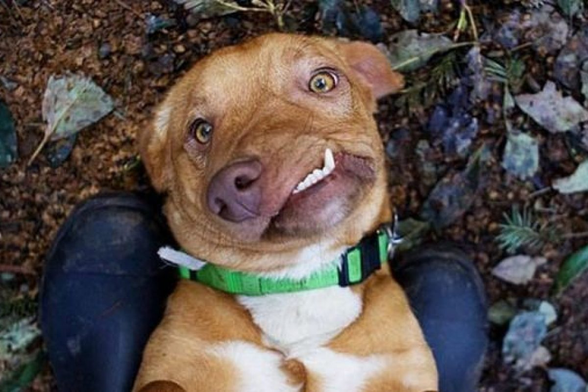 Este es Picasso, el perro que se salvó de la muerte