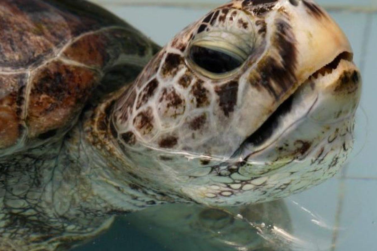 Esta es la triste historia de la tortuga alcancía…