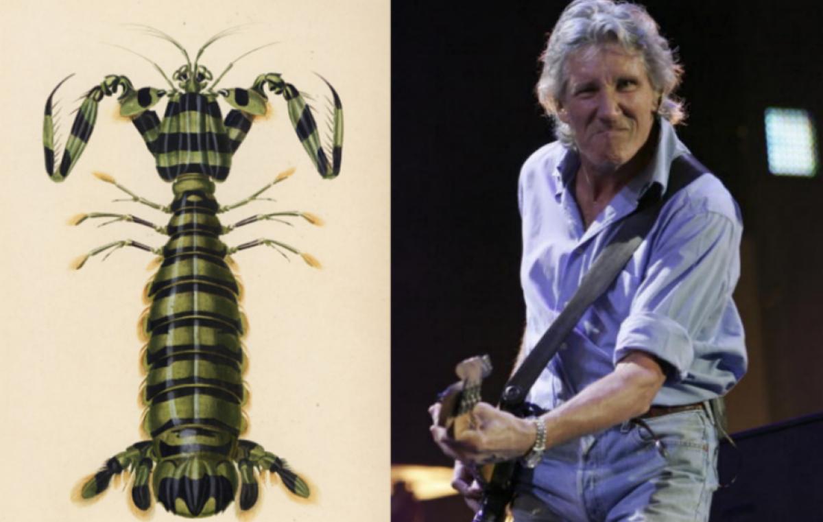 Una nueva especie de camarón lleva el nombre de los Pink Floyd
