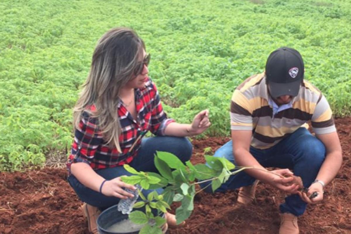 La reserva Morombí plantó 30.000 árboles nativos con universitarios y WWF