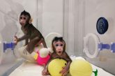 Científicos chinos crean los primeros monos clonados de la historia