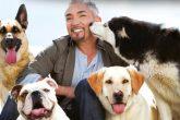 Los perros de César Millan evitaron un robo en su casa