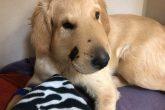 """""""Todd"""", el perro que salvó a su dueña de una serpiente cascabel"""