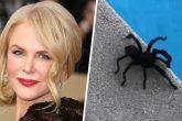 Nicole Kidman demostró que no le teme a las tarántulas