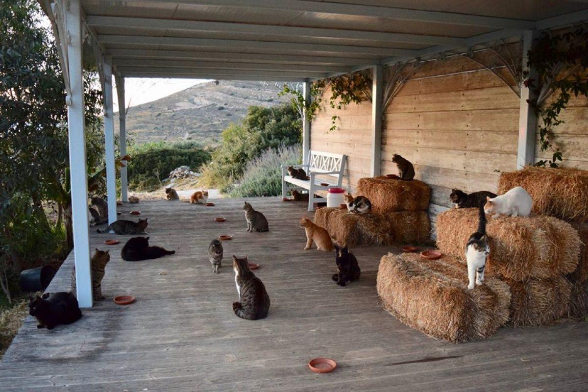 Se busca cuidador para 55 gatos en una paradisíaca isla griega