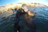 Un adorable lobo marino le da un beso a un buceador