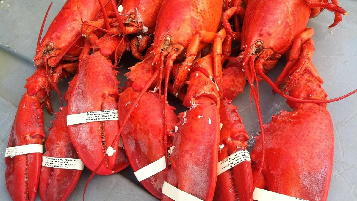 21264358-lobster1-jpg