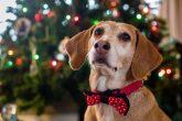 Nat Geo emitirá programa especial que calmará a tus mascotas en Navidad y Año Nuevo
