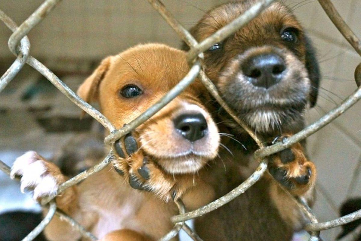 Las tiendas de mascotas en California solo podrán vender perros y gatos rescatados
