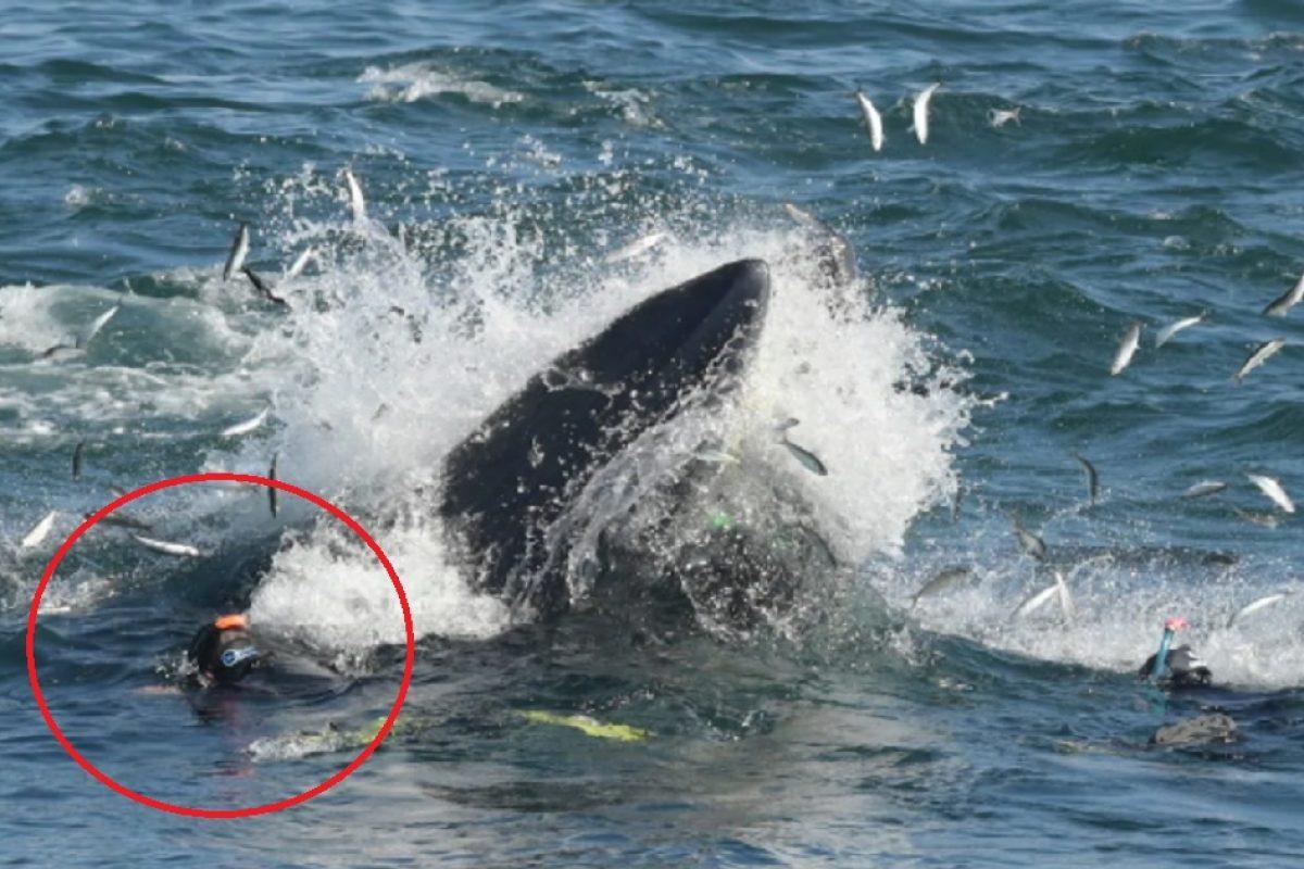 Un hombre fue tragado por una ballena y sobrevivió, el Jonas de la actualidad